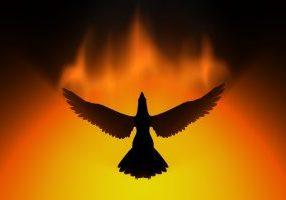phoenix rising in fire 3d concept